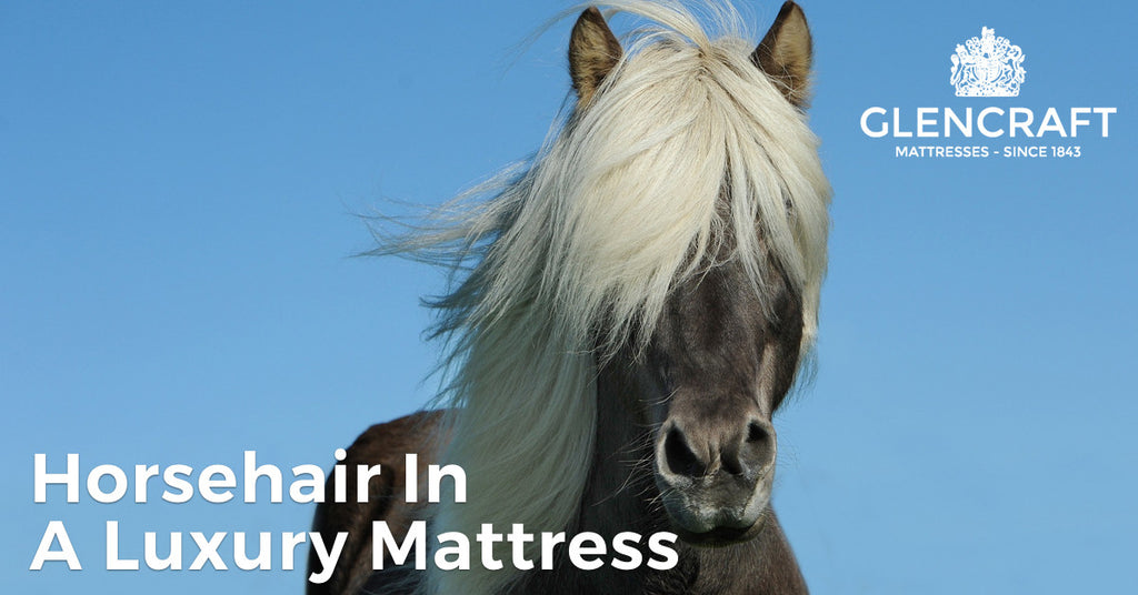 Horsehair in a luxury mattress