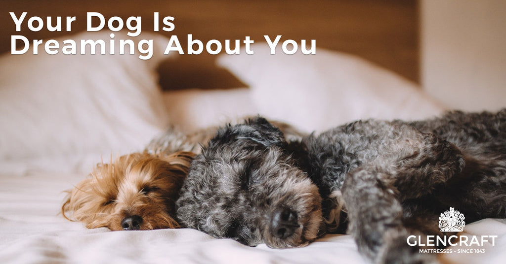 Your Dog Is Dreaming About You