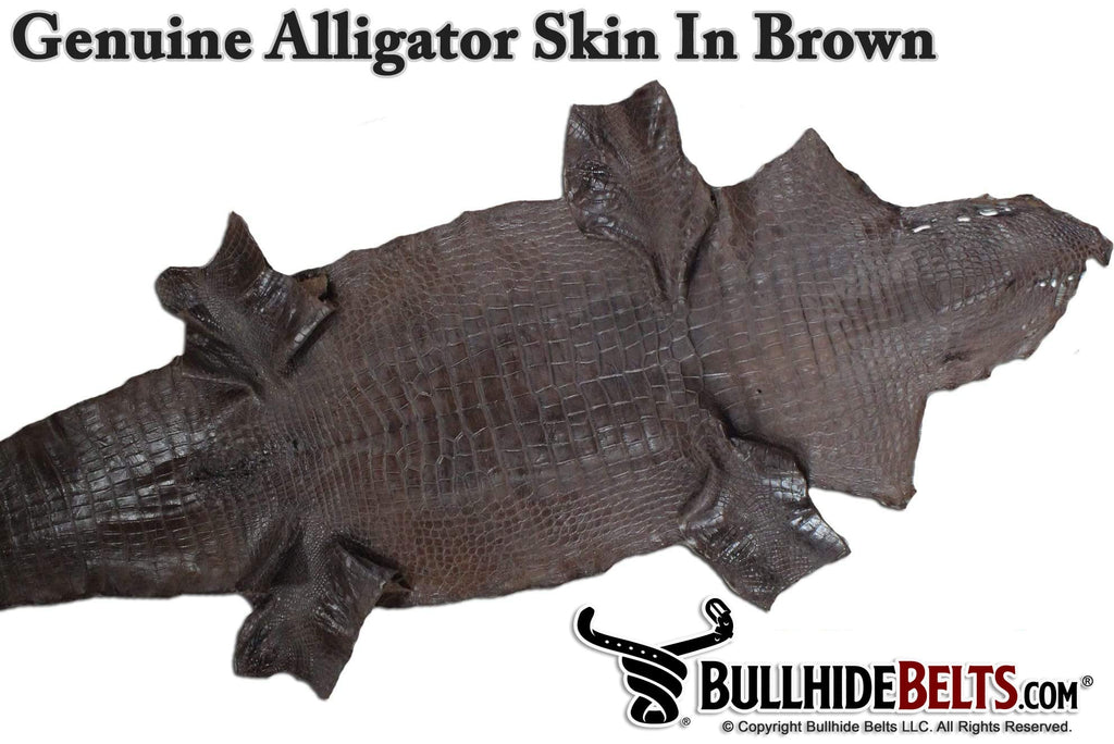 Brown American Alligator Money Belt With 25