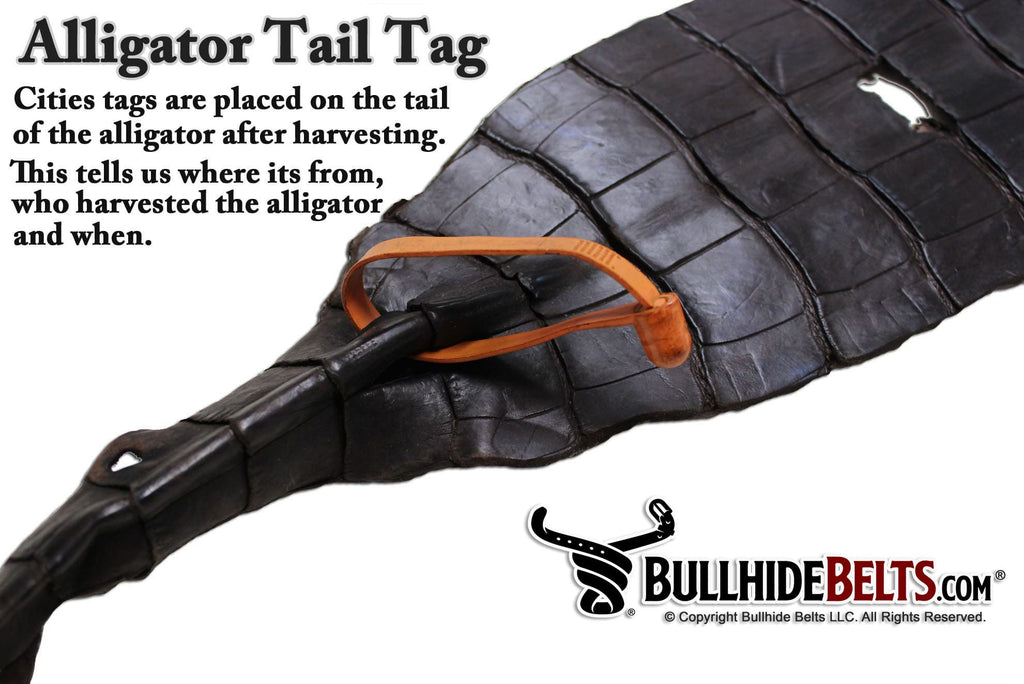 Black American Alligator Belt