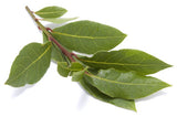 Laurel Leaf - Laurus Nobilis - 15mL