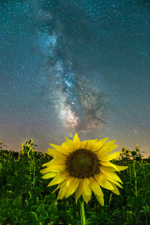 Milky Way Galaxy over sunflower near Caryville, Wisconsin.