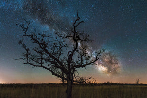 Tree silhouetted at night with the Milky Way Galaxy in the night sky at the Dunnville Wildlife Area near The Bottoms.