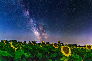 Milky Way Galaxy over a field of sunflowers near Caryville, Wisconsin.