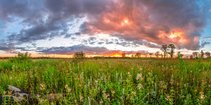 Sunset overlooking a prairie at The Dunnville Wildlife Area near Dunnville, Wisconsin.