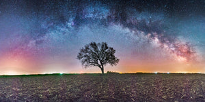 Tree silhouetted at night with the Milky Way Galaxy arching over it in a farm field near Beresford, Sout Dakota.