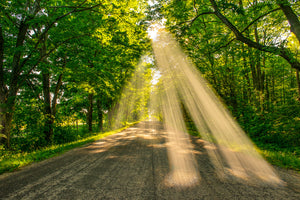 Sunbeams shinning through the canopy on Waters End Road in Door County, Wisconsin.
