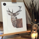 Kimberley Dewhurst - British Countryside and Wildlife Illustrator