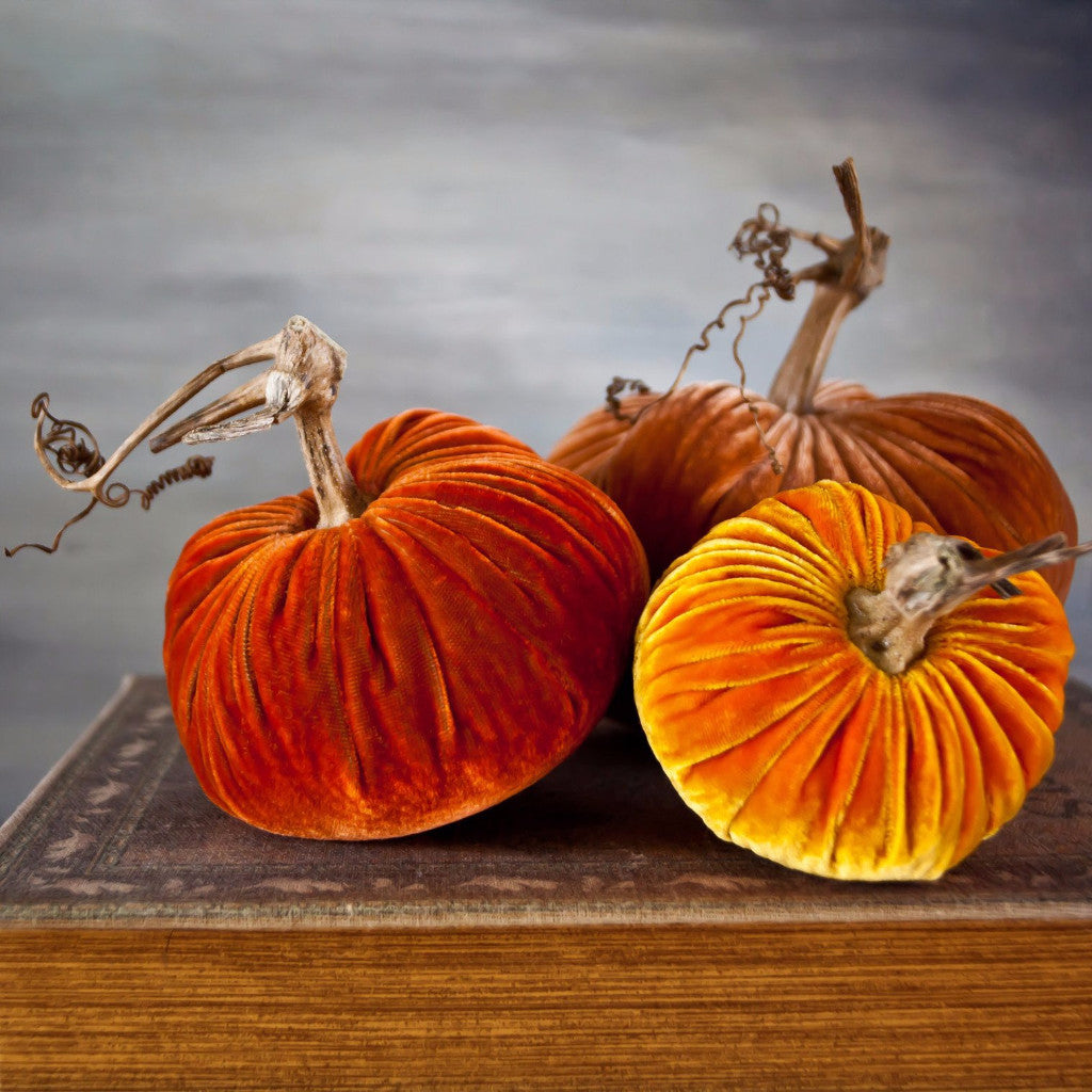 Sunrise - Velvet Pumpkins