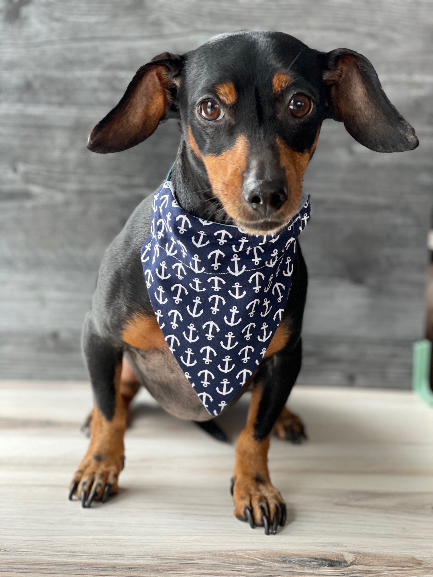 Double-Sided Anchor Bandana
