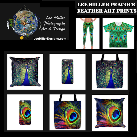 LEE HILLER PEACOCK FEATHER ART PRINTS