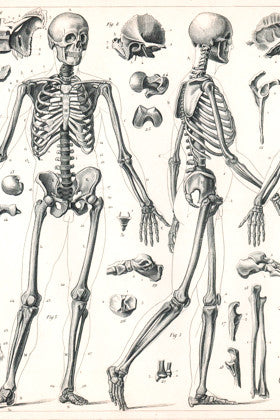 Antique Anatomy and Medical Prints