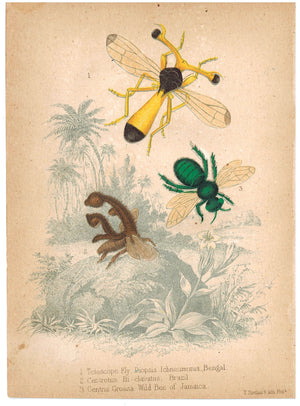 Bugs - Fly Bee and Wild Bee c.1857 Hand Color Insect Print