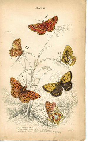 Greasy Fritillary & Small Pearl Butterfly 1835 Hand Colored Jardine Duncan Print
