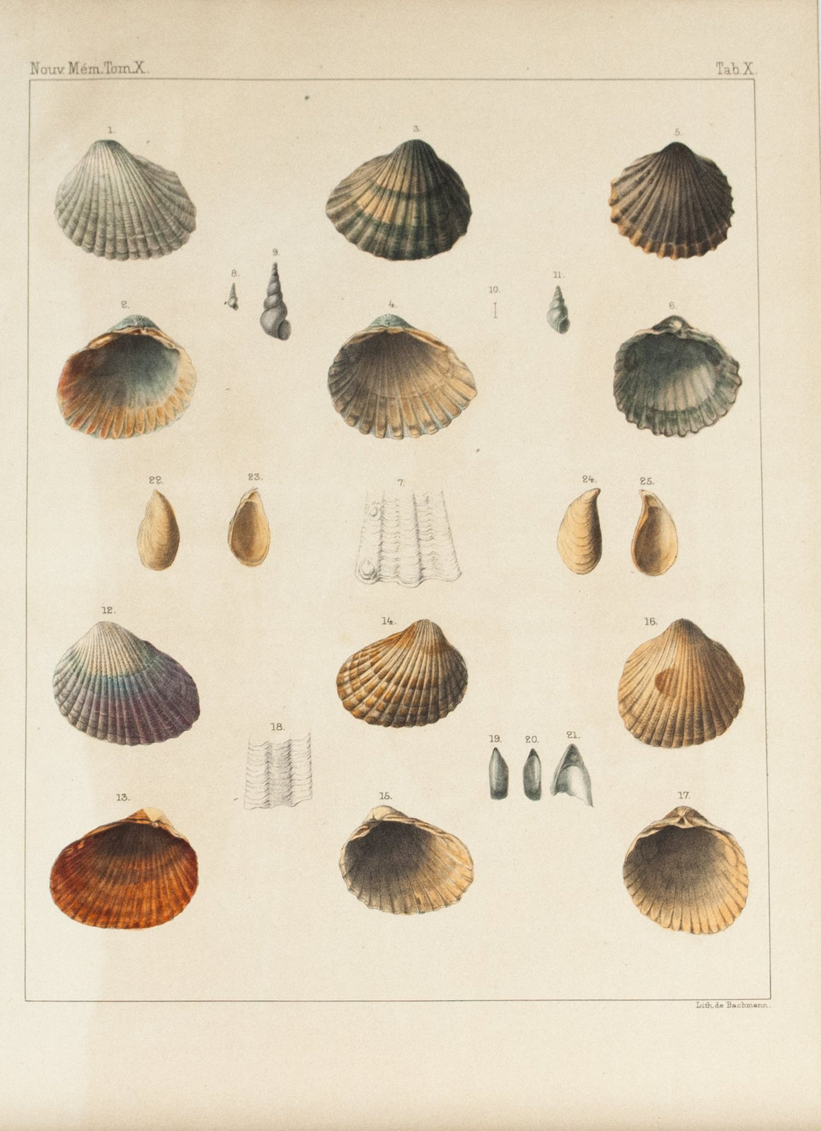 1855 Tab X - Sea Shells