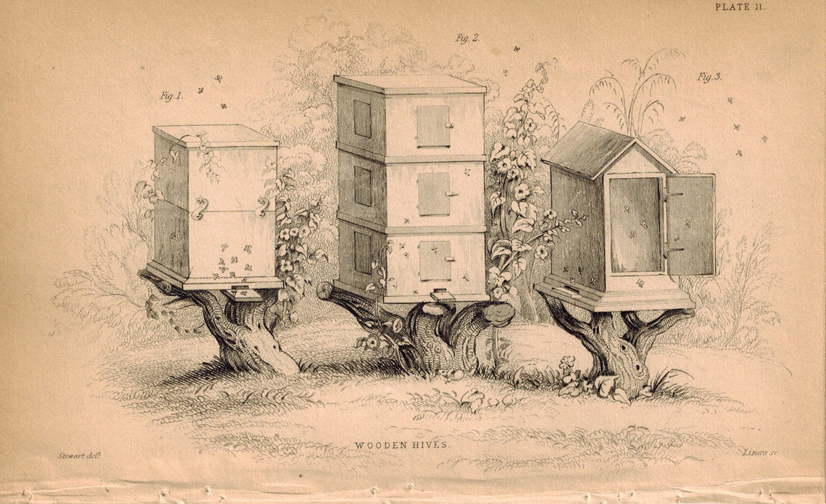 Wooden Bee Hives 1840 Original Hand Colored Engraving Print