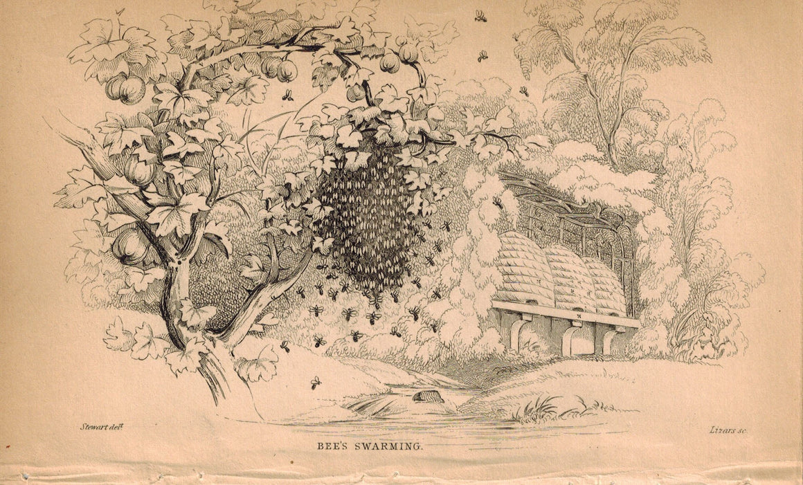 Bees Swarming 1840 Original Hand Colored Engraving Print