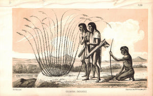 Cosnina Indians 1853 American Indian Antique Litho Print