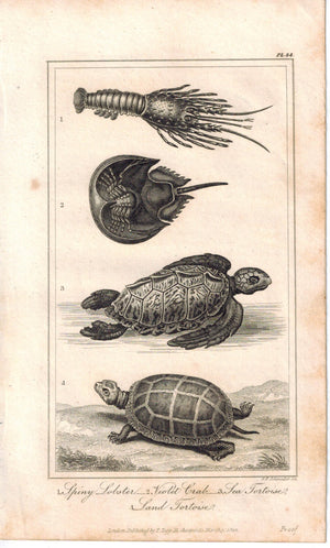Lobster Violet Crab Tortoise & Turtle 1821 Antique Engraved Print Davenport