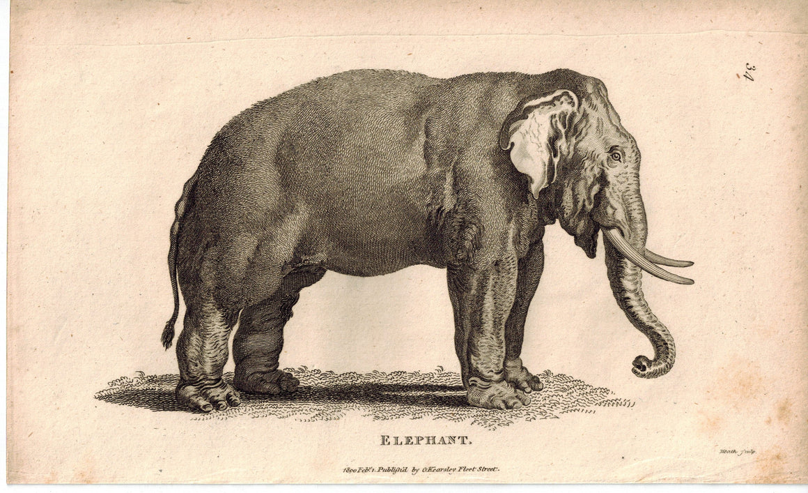 Elephant Animal Antique Print 1809 George Shaw Original Engraving