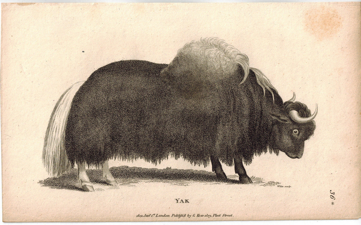 Yak Antique Print 1809 George Shaw Original Engraving
