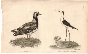 Turnstone & Long Legged Plover Bird Print 1809 George Shaw Original Engraving