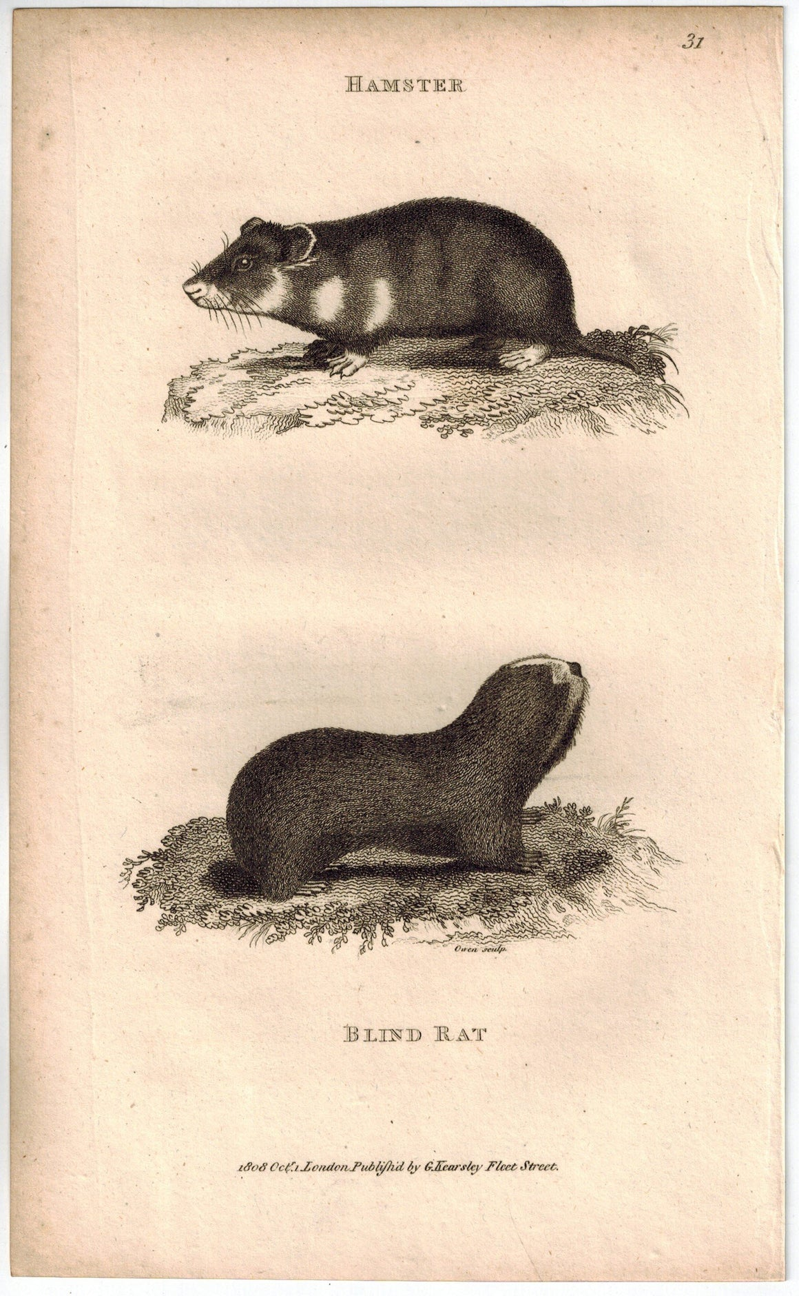 Blind Rat Print 1809 George Shaw Original Engraving
