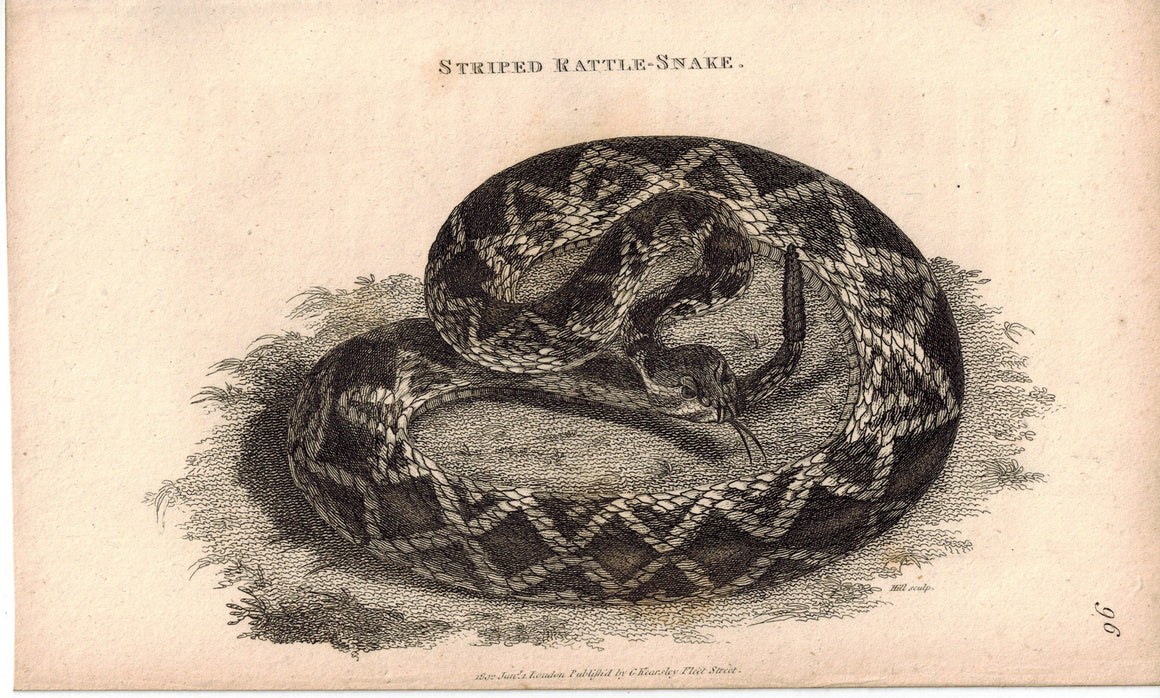 Striped Rattle-Snake 1809 Original Antique Engraving Print by Shaw & Griffith