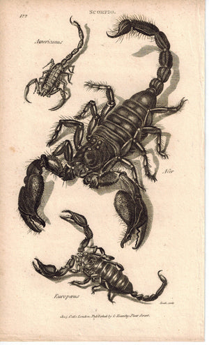 Scorpio Europaeus 1809 Original Antique Engraving Print by Shaw & Griffith