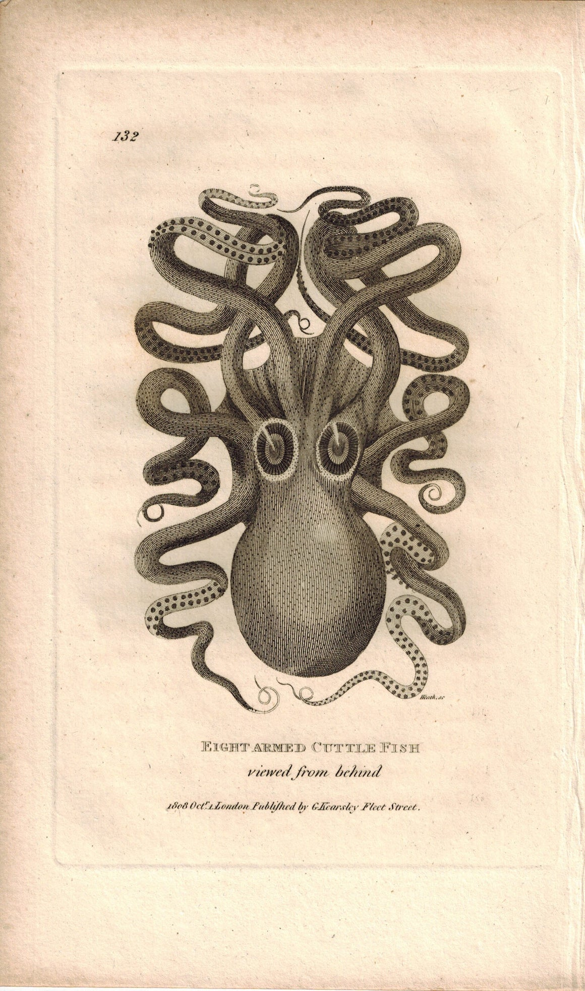 Eight Armed Cuttle Fish 1809 rare Original Engraving Shaw Print Octopus