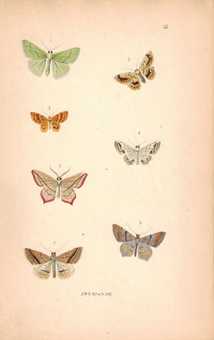 British Butterflies and Moths 1867 Print by Robinson Bradyepetes Amataria