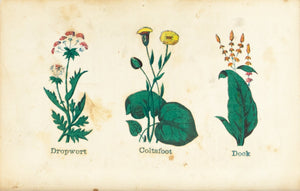 1868 Nature's Remedies - Dropwort Coltsfoot Dock - Dr. O Phelps Brown