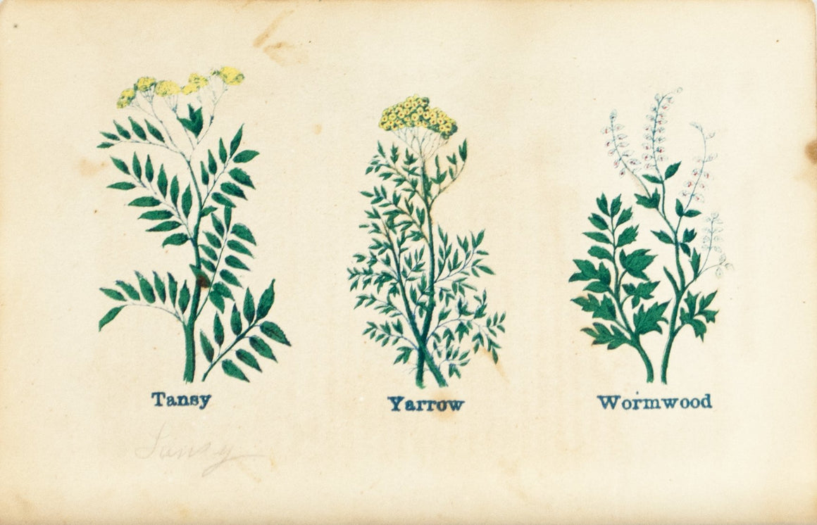 1868 Nature's Remedies - Tansy Yarrow Wormwood - Dr. O Phelps Brown