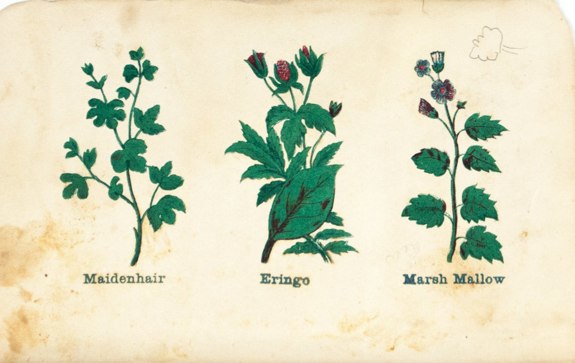1868 Nature's Remedies - Maidenhair Eringo Marsh Mallow - Dr. O Phelps Brown