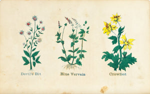 1868 Nature's Remedies - Devil's Bit Blue Vervain Crowfoot - Dr. O Phelps Brown