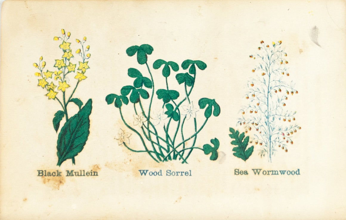 1868 Nature's Remedies - Black Mullein Wood Sorrel Sea Wormwood - Dr. O Phelps Brown