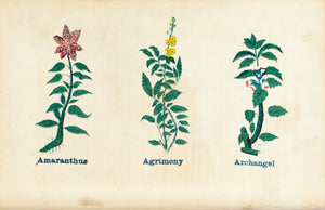 1868 Nature's Remedies - Amaranthus Agrimony Archangel - Dr. O Phelps Brown