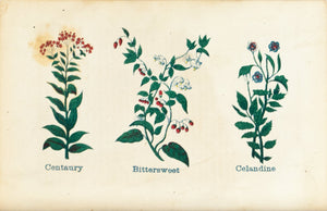1868 Nature's Remedies - Centaury Bittersweet Celandine - Dr. O Phelps Brown