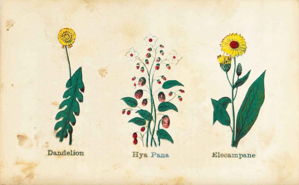 1868 Nature's Remedies - Dandelion Hya Pana Elecampane - Dr. O Phelps Brown
