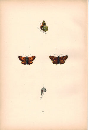 1891 Plate LXIX - Silver-Spotted Skipper - Morris