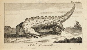 1774 The Crocodile - Hulett