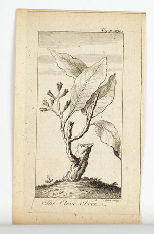 1774 The Clove Tree - Hulett