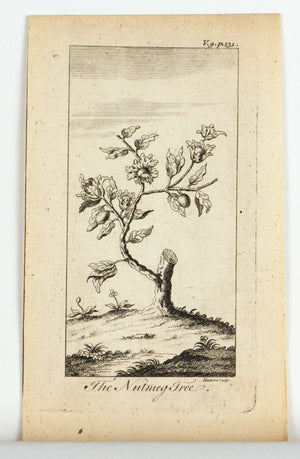 1774 The Nutmeg Tree - Hulett