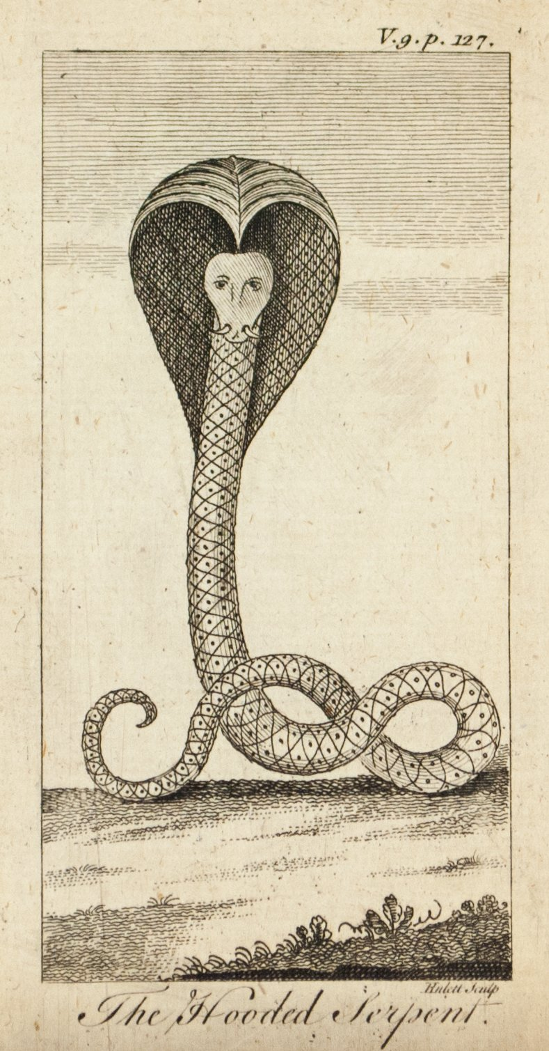 1774 The Hooded Serpent - Hulett