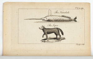 1774 The Narwhale and The Lynx - J Lodge