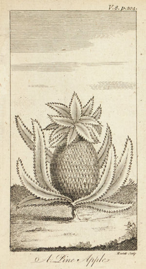 1774 A Pine Apple [Pineapple] - Hulett