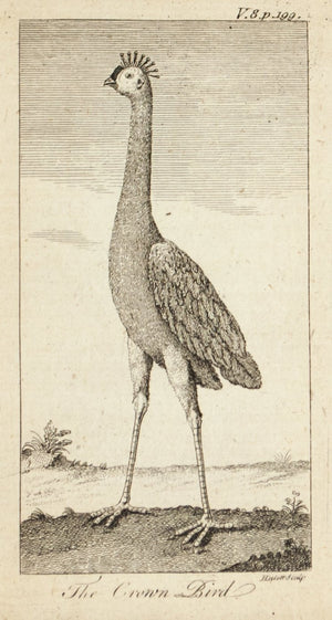 1774 The Crown Bird - Hulett