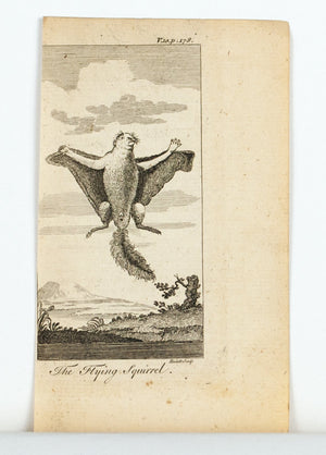 1774 The Flying Squirrel - Hulett