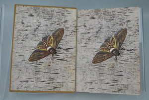 Moths of the Limberlost by Gene Stratton-Porter 1912