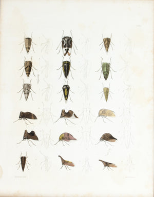 1854 Plate 13 - Treehoppers - Emmons